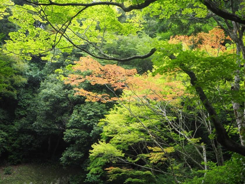 เกียวโต 2017_๑๗๐๙๐๒_0180.jpg